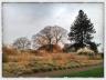 Grass garden, Kew Gardens